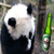 Pan[)a avatar
