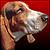 HoundDawg avatar
