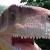 Mr-Raptor avatar