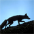 FoxNL avatar