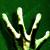 dngr avatar