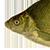MrBrax avatar