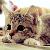 Tony The Tiger avatar