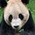 PandaBear1984 avatar