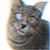 Kicius avatar