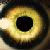 The EiE avatar