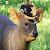 PuduMeister avatar