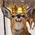 FiBzY avatar