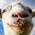 Simulated goat avatar