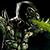 reptile_2530 avatar