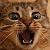 QuartzKayak avatar