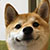 RegularTerry avatar