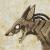 aVeryTrickyFox avatar