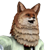 AGenericFoxMain avatar