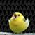 SinnohSquid avatar