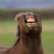 YoloBro avatar