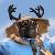 AntsHUD avatar