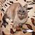 Suom1 avatar