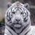 Tigre11ify avatar