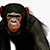 Bobtheguy avatar