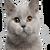 SuperJunior22 avatar