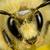 speeder360 avatar