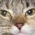 Roket_Lawnchair avatar