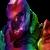 Rainbow Soldier