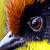 BirdsOnMyBack avatar