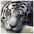 MaX1mU5 avatar
