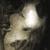 SinOfApocalypse avatar