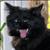 ur4ik123 avatar