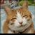 insaine_kitty avatar