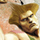 Guile category icon
