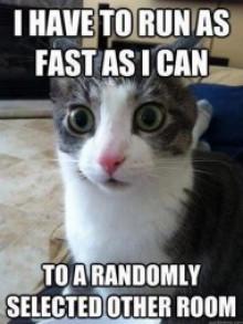 run cat
