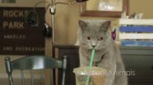 Aaron's cat