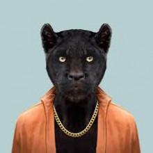 Panthera Cool Spray