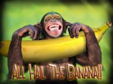 Hail The Banana