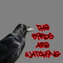 Birds are Watching