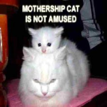 mothership cat