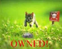 kitty owned