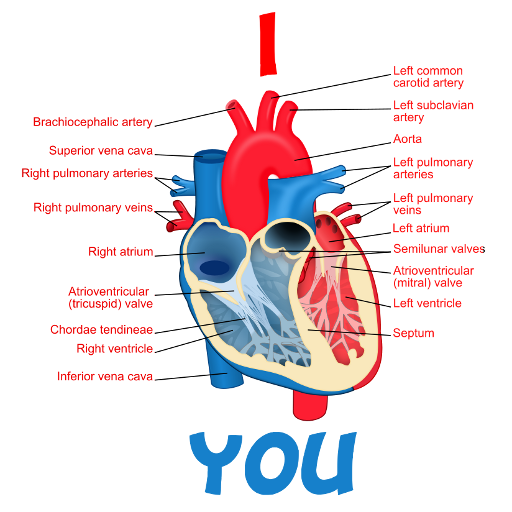 """I Cardiac Muscle You"" Spray (HQ)"