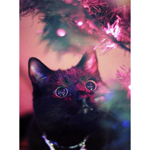 A Very Christmas Cat