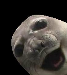 Spray Seal - Transparent (fix)