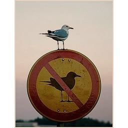 Birdonabirdsign.