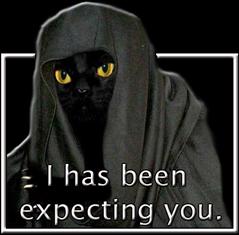 Sith Cat