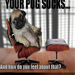 Your Pug Sucks...