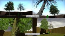 Blackgum_trees