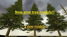 Hg_pine_trees_01