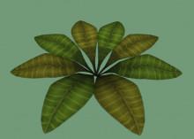 Big leafy plant